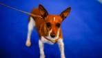 Hayvanları Koruma Kanununda değişiklik Meclis gündemine geliyor