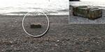 Ereğlide içinde mühimmat bulunan sandık kıyıya vurdu