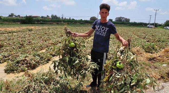 Antalyadaki sağanak tarım arazilerine zarar verdi