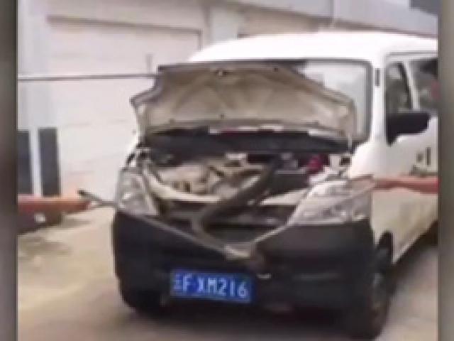 Arabadan çıkan dev kobra korkuttu