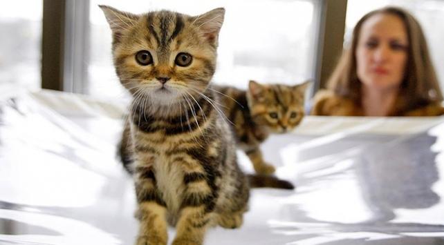 Kediler 9 bin yıldır insanlarla iç içe