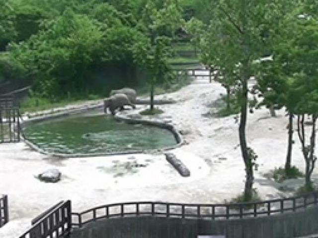 Yavru fil için ailesi seferber oldu