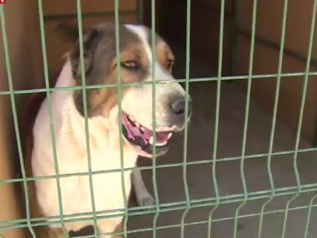 Köpek oteli minik dostlara evlerini aratmıyor