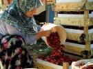 'Rusya pazarı kiraz üreticisini rahatlattı'