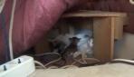 Hamile kedi camide yavruladı