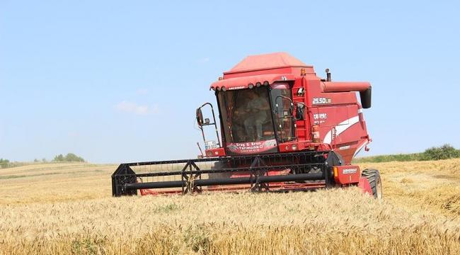 Edirnede buğday hasadı başladı