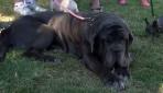Dünyanın en çirkin köpeği