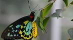 Kısa süren güzellik: Kelebekler