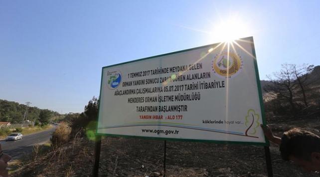 Mendereste zarar gören alana 1,5 milyon fidan dikilecek