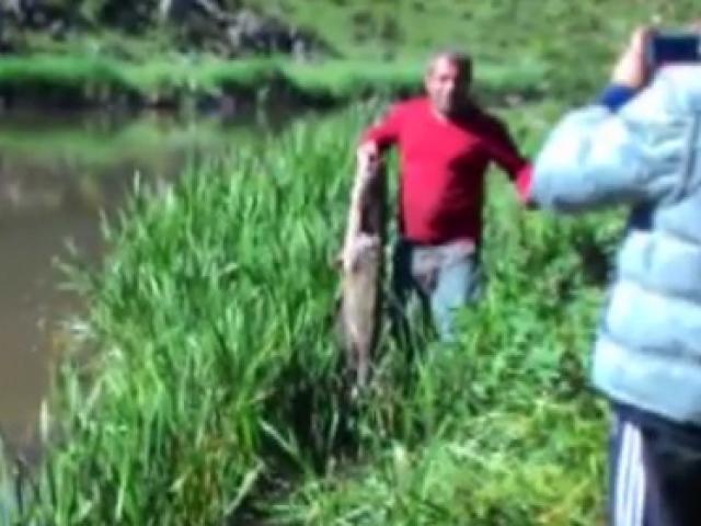 Amatör balıkçı dev yayın balığı yakaladı
