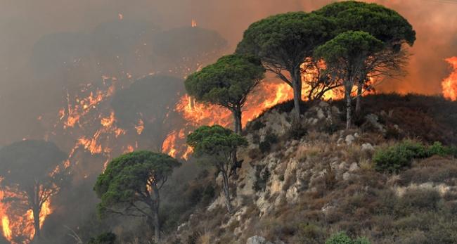 İtalyadaki orman yangınları can aldı