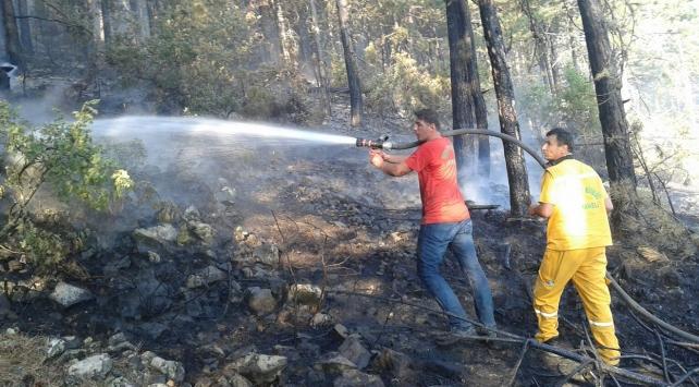 Bursadaki orman yangınında 5 hektar alan zarar gördü