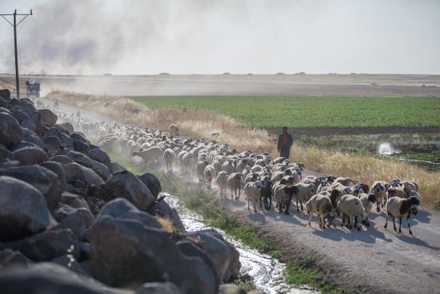 Çobanların mera yolculuğu