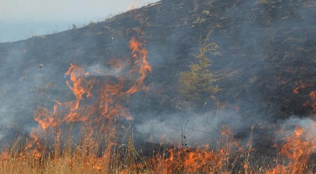 Hataydaki yangında 1,5 hektarlık alan zarar gördü