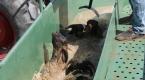 """Koyunlar """"özel banyo""""da dezenfekte ediliyor"""