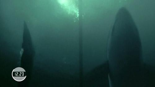 Ünlü yüzücü köpek balığıyla yarıştı
