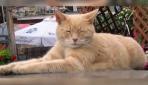 'Kedi' belediye başkanı öldü