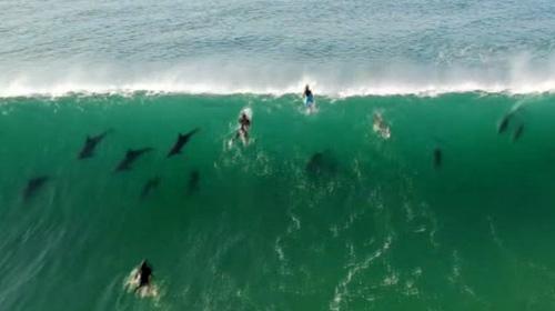 Yunuslarla sörf