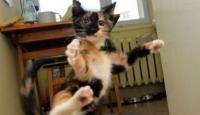Kedilerin Garip Ve Tatlı Halleri