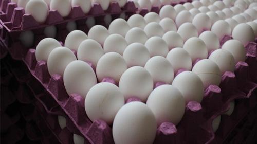Avrupada yumurta skandalı büyüyor