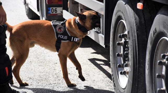 Dedektör köpekler kaçakçılara göz açtırmadı