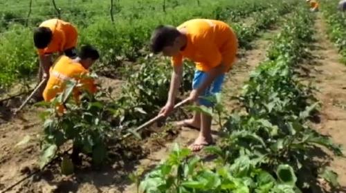 Çocuklar için tarım kampı