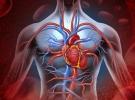 Kök hücreler yaşlı kalplere umut mu olacak?