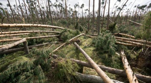 Fırtına on binlerce ağacı kökünden söktü