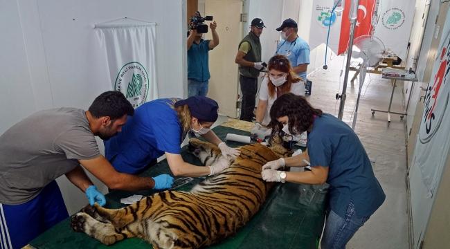 Yaralı 4 bin 500 yaban hayvanına yardım eli uzatıldı