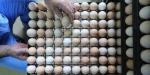 """Türkiyedeki yumurtalarda """"fipronil"""" çıkmadı"""