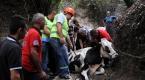 Dere yatağına düşen ineği belediye ekipleri kurtardı
