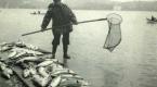 İstanbulun balık cenneti olduğu yıllardan kareler