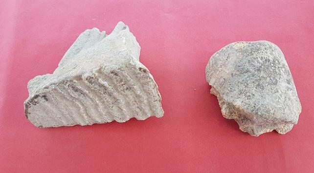 Adanada Asya filine ait kalıntılar bulundu