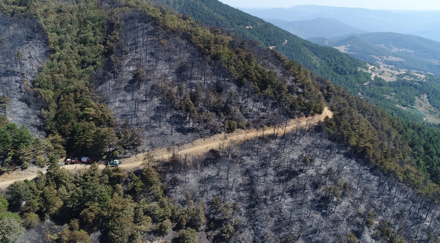 Sakaryadaki orman yangını kontrol altına alındı