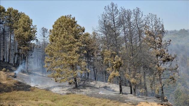 Sakaryadaki orman yangını kontrol alına alındı