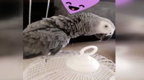 Papağan Yakup hırsızlık çetesini çökertti