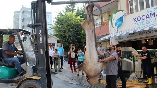Marmaradan 2 köpek balığı çıktı
