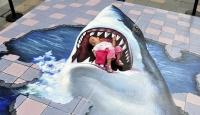 Kaldırımdaki Köpek Balığı