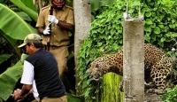 Hindistan'da Leopar Dehşeti: 11 Yaralı