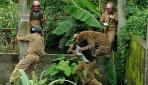 Hindistanda Leopar Dehşeti: 11 Yaralı