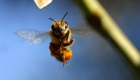 Arıların Sırlı Dünyası