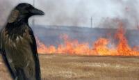 Karga Yangın Çıkardı..!