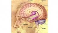 Beyin Damarı Tıkanıklığı 3. Ölüm Nedeni