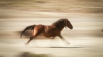Yaylaların mevsimlik atları