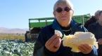 Canan Karatay: Lahana yiyin çünkü...
