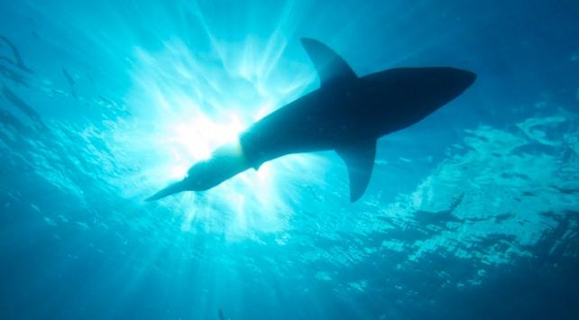 Köpekbalığından kaçmak için 3 saat yüzdü