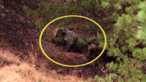 Boz ayıyı vuran kişiye köylünün öfkesi dinmedi