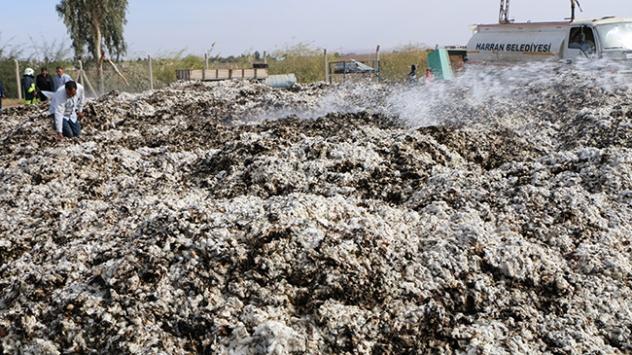 Şanlıurfada 105 ton pamuk yandı