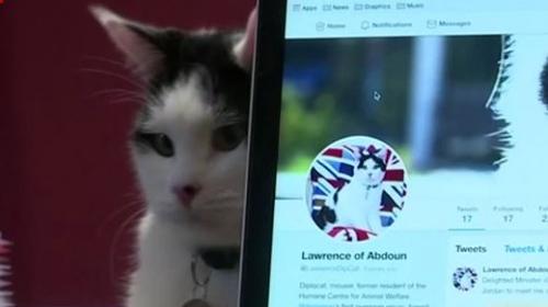 İngilterenin diplomat kedisi