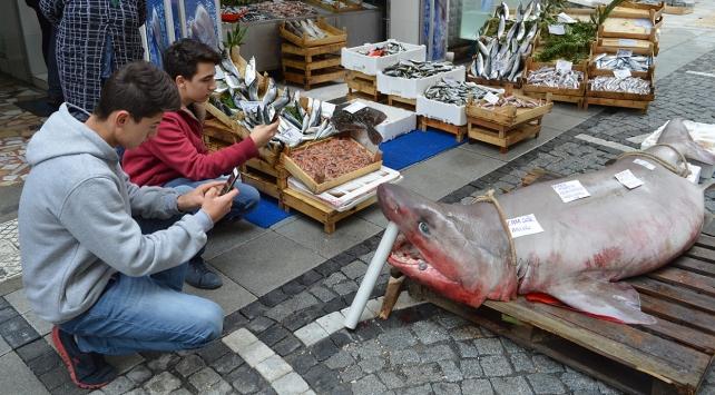 Balıkçı tezgahında yarım tonluk köpek balığı